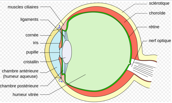Ophtalmologie fichier