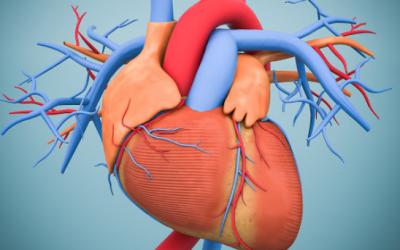 Cardiologie-2